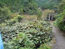 Miura-guchi